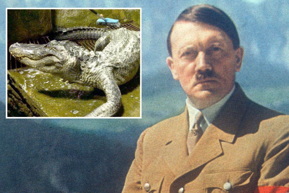 Alligator said to have belonged to Adolf Hitler dies aged 84 at Moscow zoo