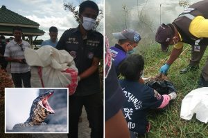 New born baby boy torn apart and eaten by monitor lizards after being dumped by a pond in Thailand