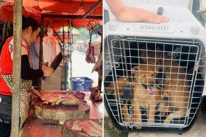 Coronavirus 'breeding ground' as dogs still butchered for meat at China's notorious Yulin market despite ban