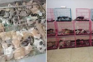 Hundreds of stolen cats discovered crammed into tiny rusty cages 'ready to be served as food' in China