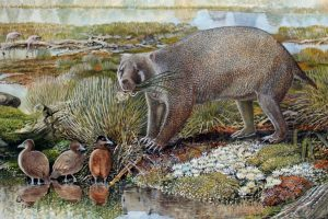 Mega-wombat the size of a BEAR discovered in Australia after 25 million years